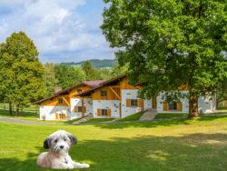 Gutshotel Feuerschwendt – die ideale Adresse für Urlaub mit Hund!