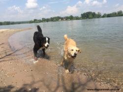 Hundestrand Oppenheim am Rhein